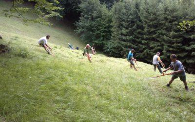 Delovna akcija – košnja in grabljenje travnikov Jelenca in Dobrivec