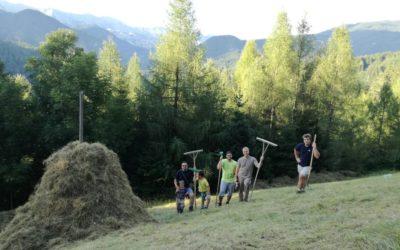Spravilo sena in izdelava kope v Kukovnici